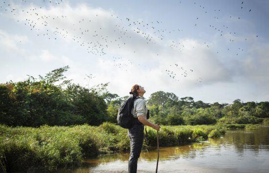 La naturaleza salvaje de los parques naturales del Congo.