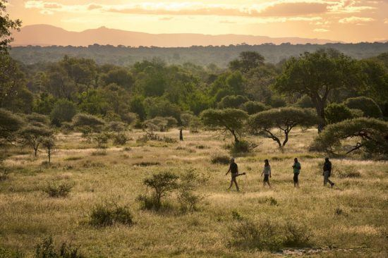 Les guides et pisteurs de Lion Sands | Un safari à pied pour fouler les terres de Lion Sands