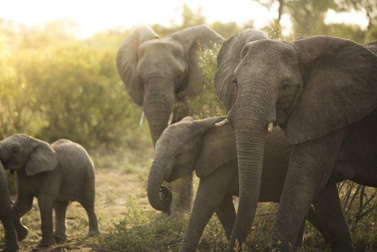 Eine Elefantenherde mit Nachwuchs