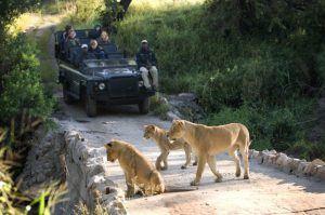 La familia More en Lion Sands