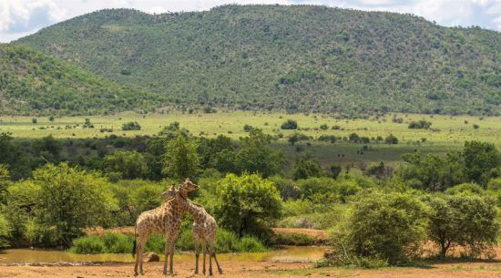 Top Reiseziele in Südafrika: Der Pilanesberg Nationalpark