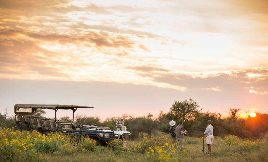 Madikwe Game Reserve gehört zu den Top Reisezielen in Südafrika