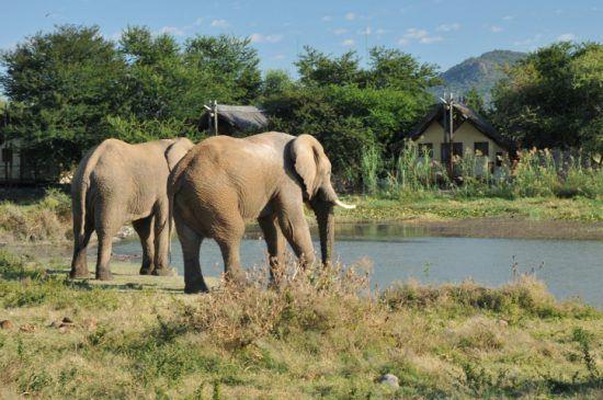 Madkiwe   Safari en Afrique du sud sans paludisme