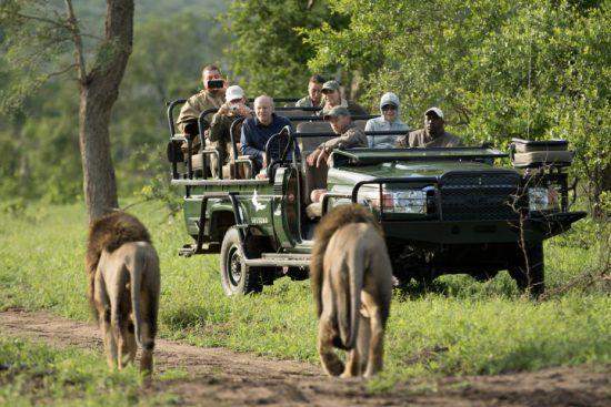 Niños y mayores podrán disfrutar juntos de la aventura de un safari