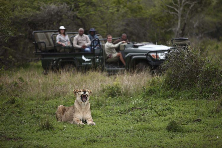 Phinda Game Drive at Phinda Private Game Reserve in KwaZulu-Natal