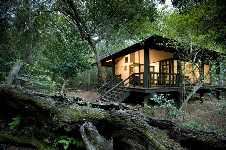 &Beyond Phinda Forest Lodge in Phinda Private Game Reserve in KwaZulu-Natal