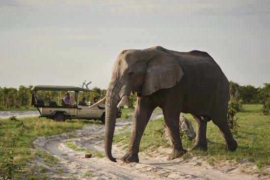 Más de 120.000 elefantes pueblan el Parque Nacional Chobe.