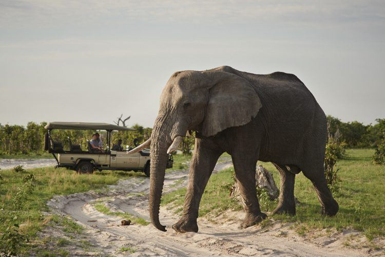More than 12,000 elephants can be found in Chobe National Park, Botswana