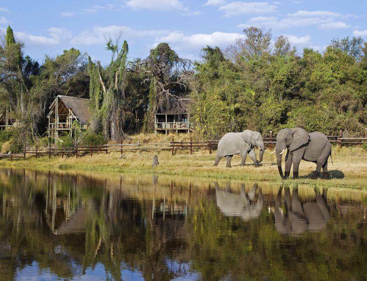 Elephants roaming in front of Savute Safari Lodge in Chobe National Park, Botswana