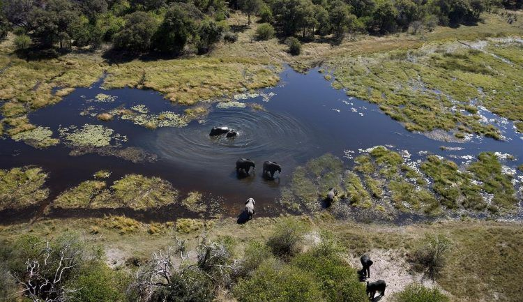 Elephant cross the Delta