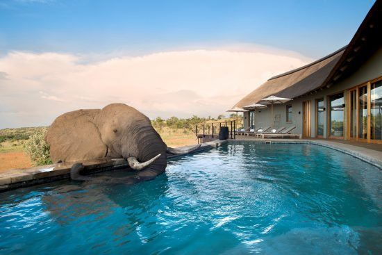 Ein Elefant trinkt aus dem Pool der Mhondoro Safari Lodge