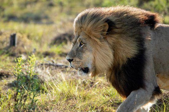 Pionee Trail dans la réserve de Gondwana