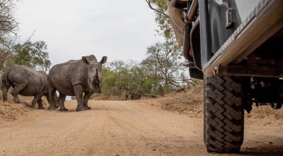 ¿Es-seguro-viajar-a-sudáfrica-rinoceronte