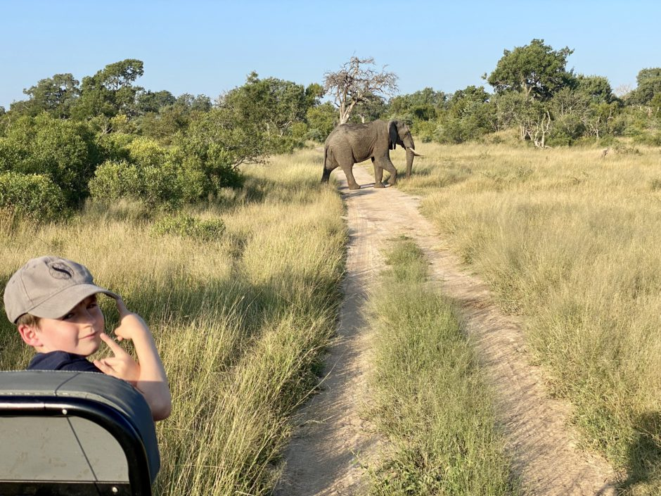 Matthew being tracker with an elephant at Silvan
