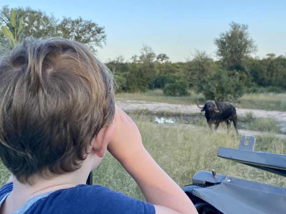 Michael viewing a buffalo at Silvan while in lockdown