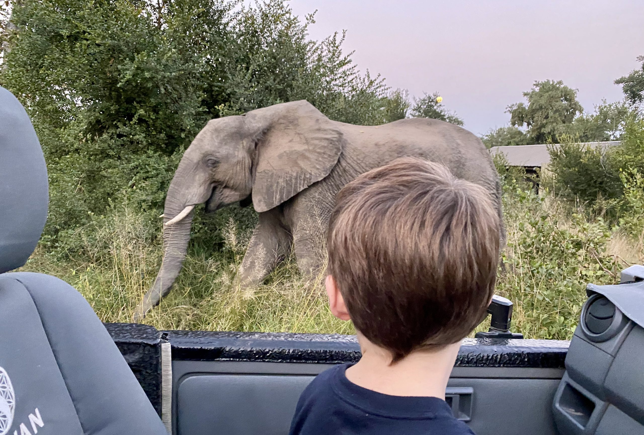 Michael admitting an elephant at Silvan while under lockdown