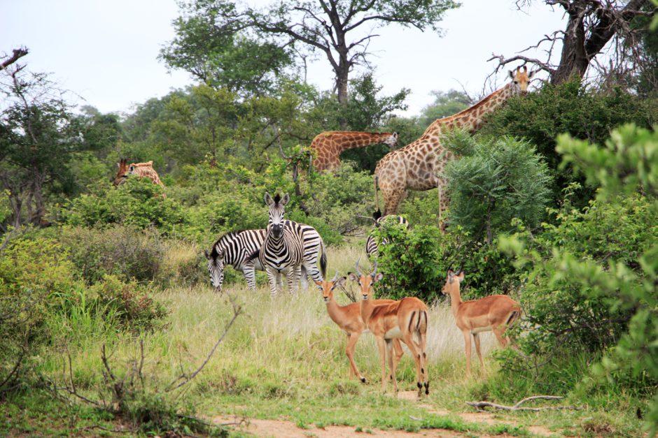 Hay algo en la jirafa que siempre me hace sonreír