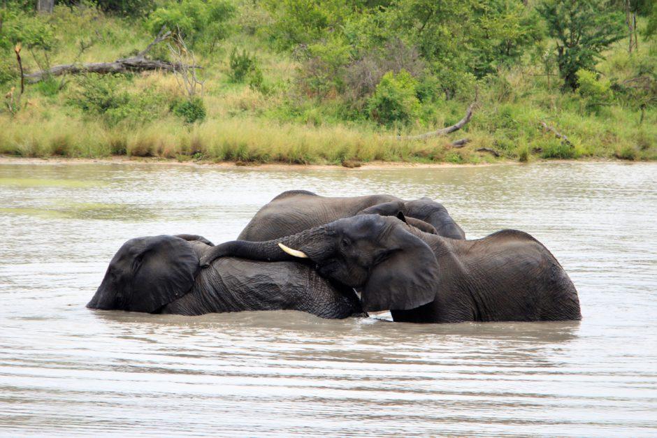 Elefantes disfrutando de un baño