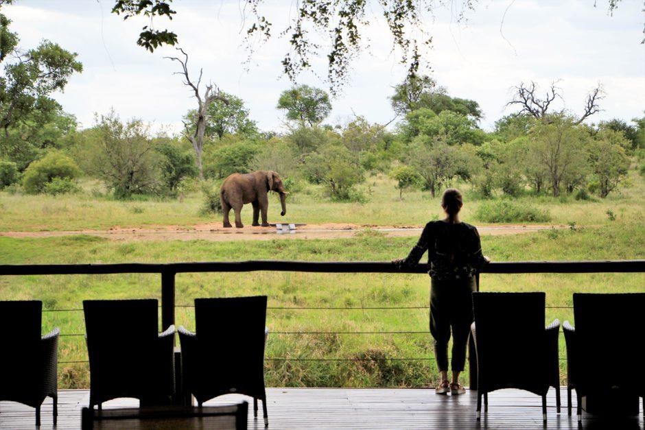 Un elefante sediento en la charca de agua privada de Senalala
