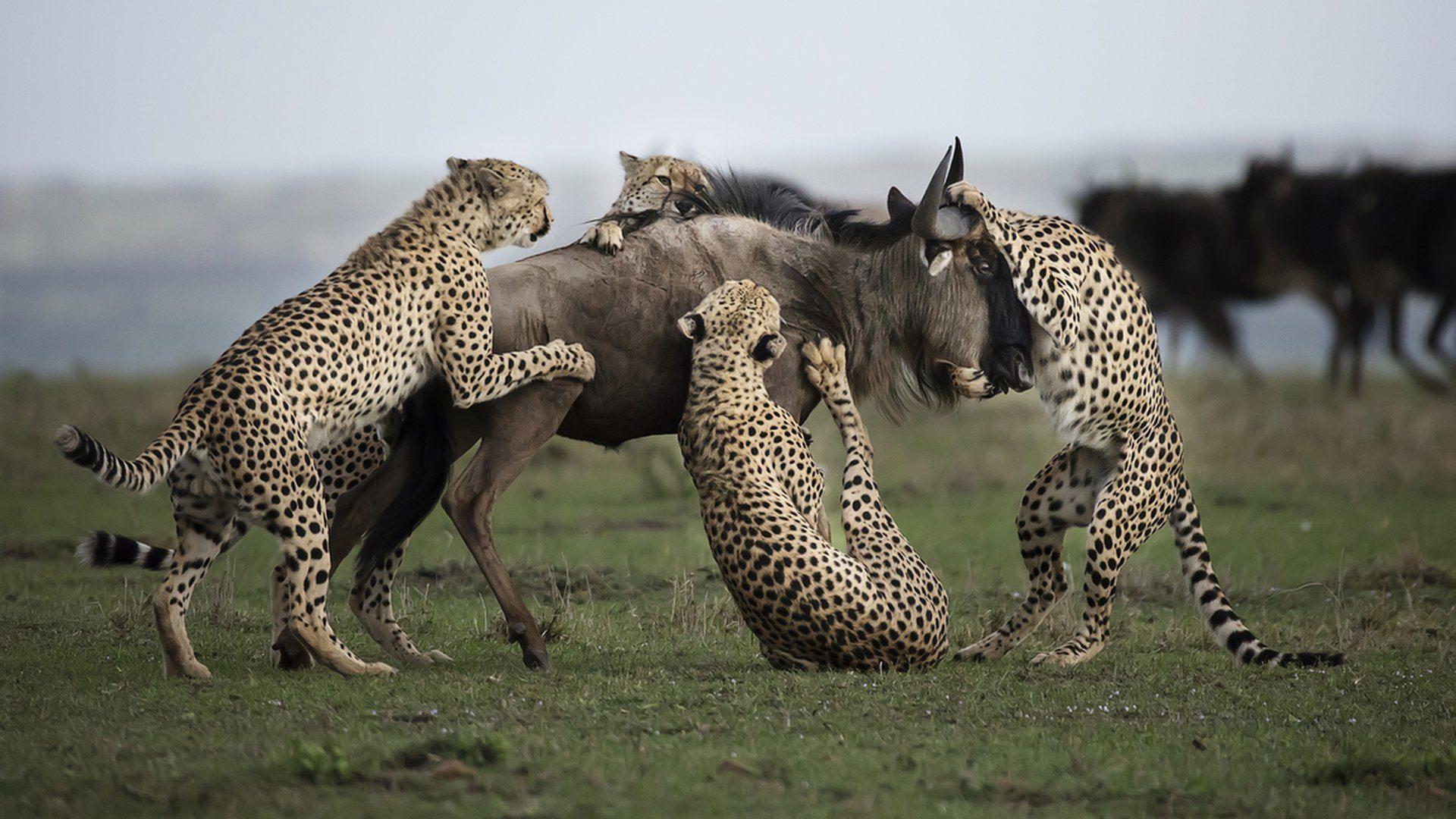 clement-kigaru-apoty-cheetahs