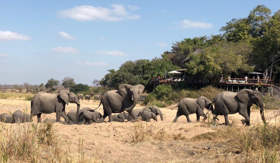 Elefanten schreiten durchs Flussbett vor der Jock Safari Lodge