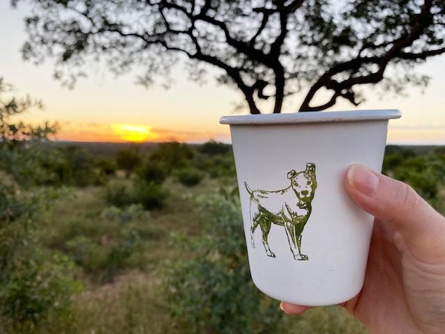 Auf Safari mit der Jock Safari Lodge in Südafrika