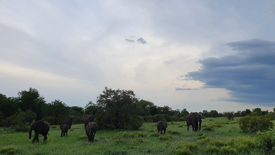 Herd of elephants in the bush at Londolozi Private Game Reserve