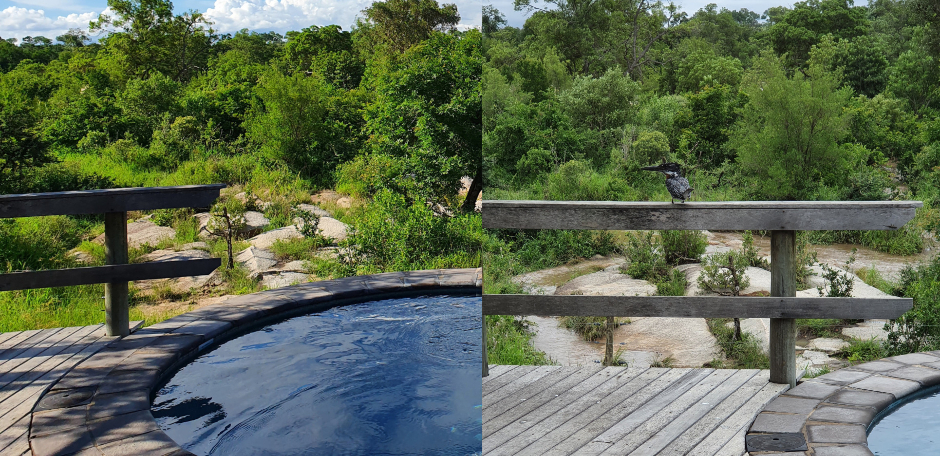 Before and after photos of the view in front of the Londolozi Founders Room after a rainstorm