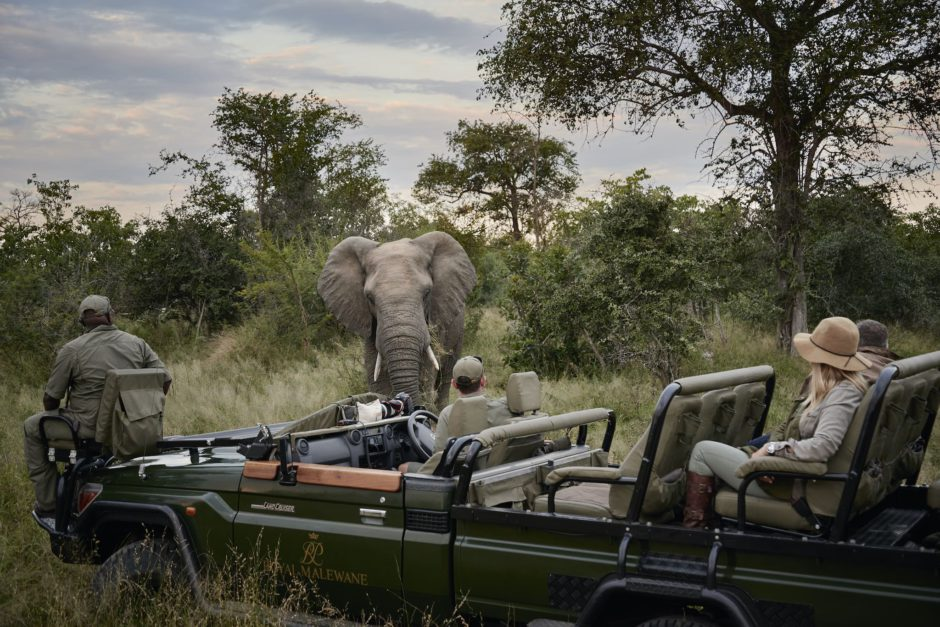 African safari socially distant game drives.