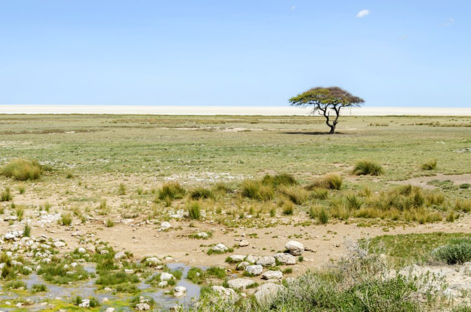 Regenzeit in Namibia: Der Etosha Nationalpark nach Regenfällen