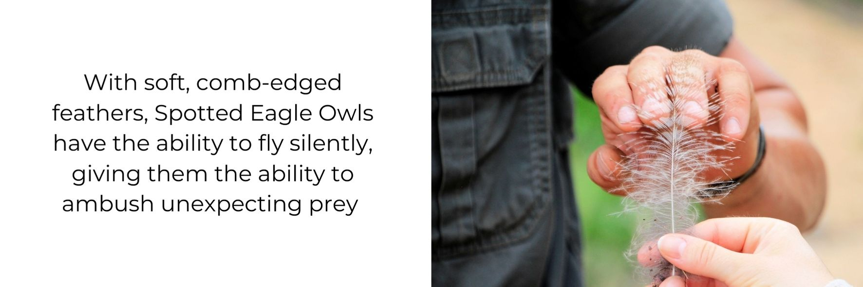 Fun fact about owls