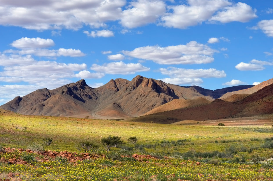 Namibia in der Regenzeit: Grüne Wüste statt Trockenheit