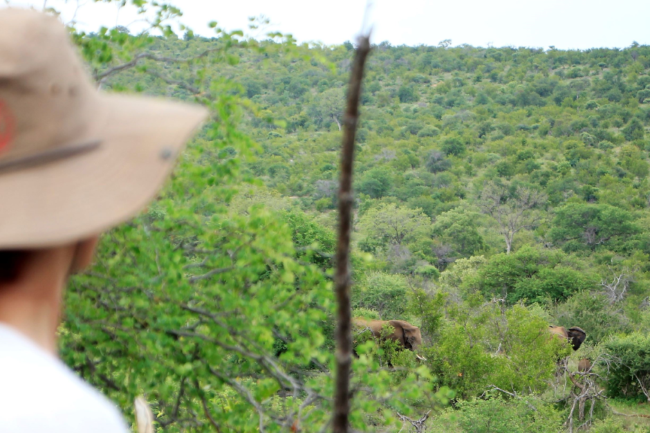 On walking safari: Some of the elephants surrounding us