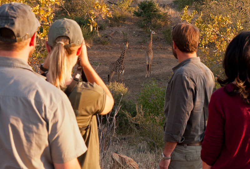 Group on a walking safari with experienced guides observe two giraffes