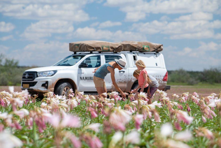 Die Sandhof Lilien in voller Blüte Anfang 2021