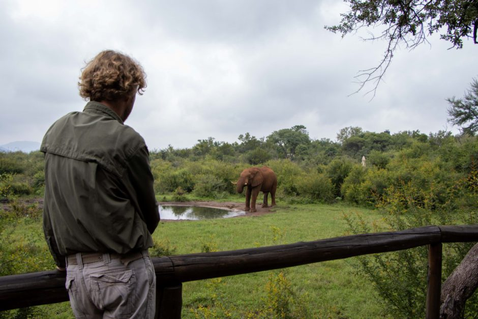 Elephant at waterhole in front of Motswiri Private Safari Lodge
