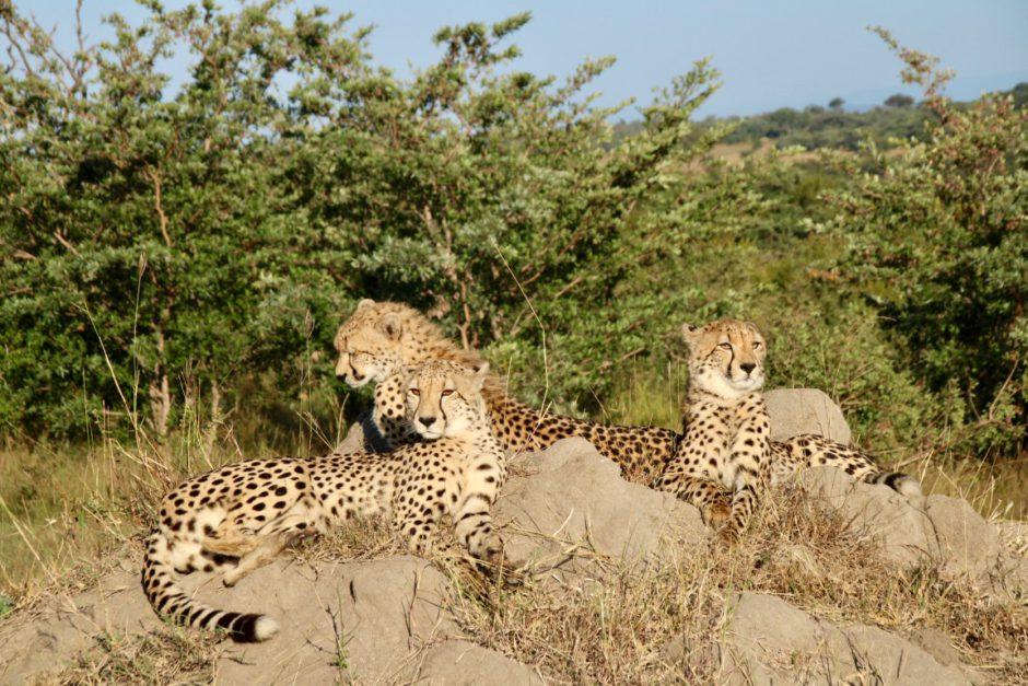Rencontres incroyables lors des safaris