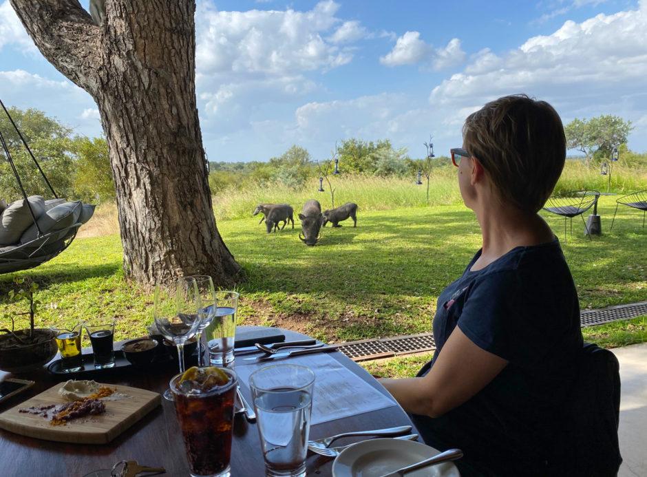 Tierischer Besuch beim Mittagessen in der Sabi Sabi Earth Lodge
