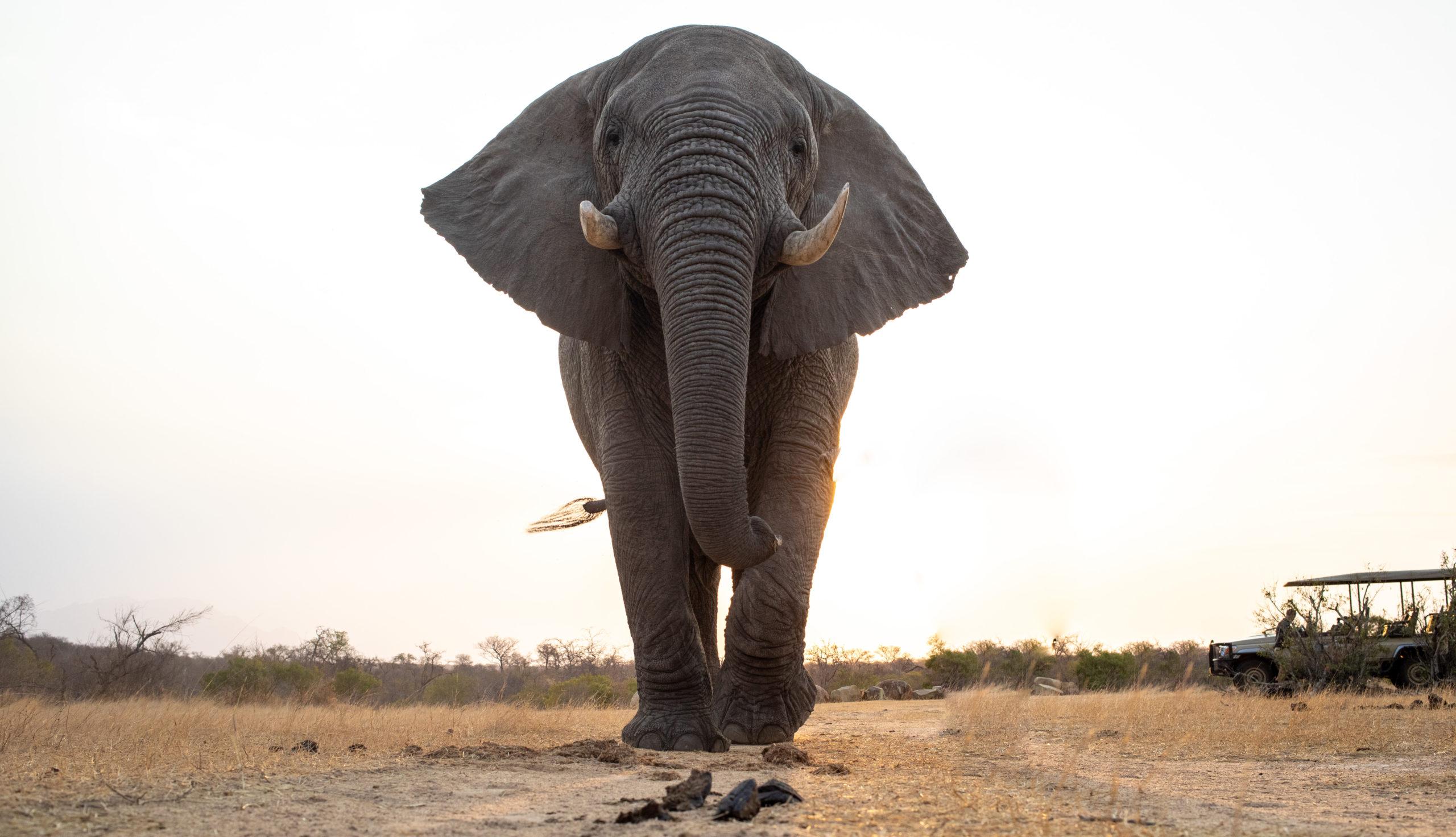 Cita de elefante