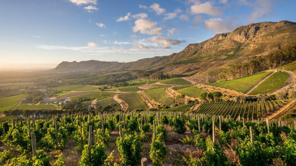 La vallée de Constantia et ses vignobles