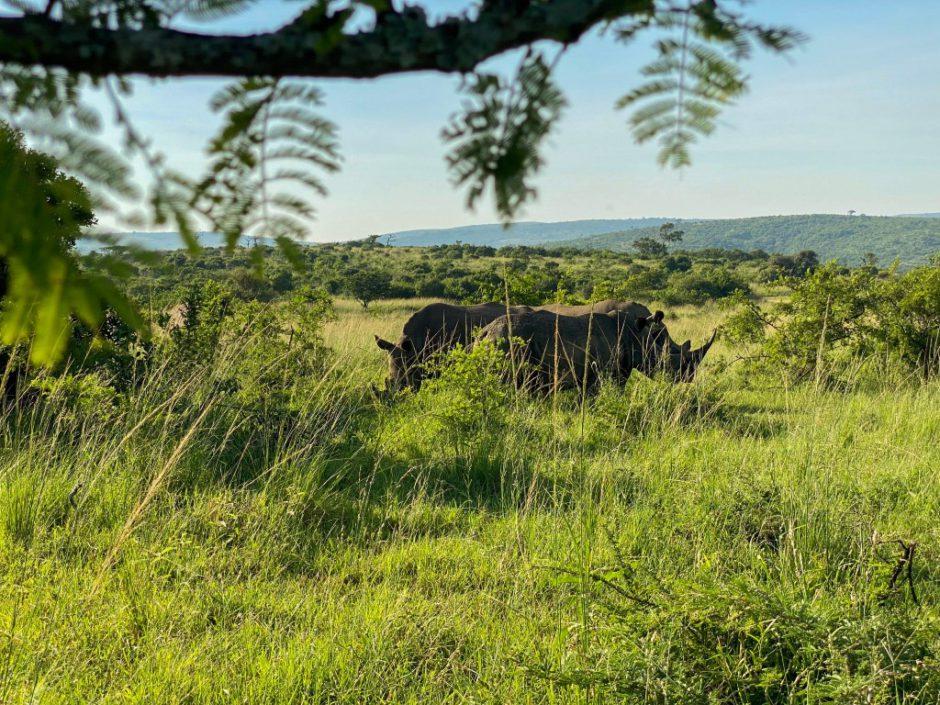 Nashörner aus nächster Nähe beobachten - Rhino Ridge Safari Lodge