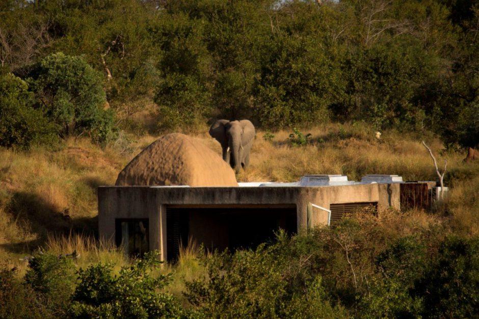 Sabi Sabi Earth Lodge si bien camouflé dans la nature