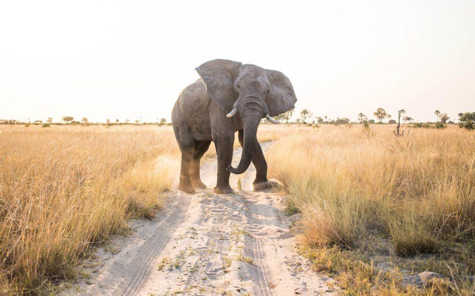 L'Afrique attend votre arrivée
